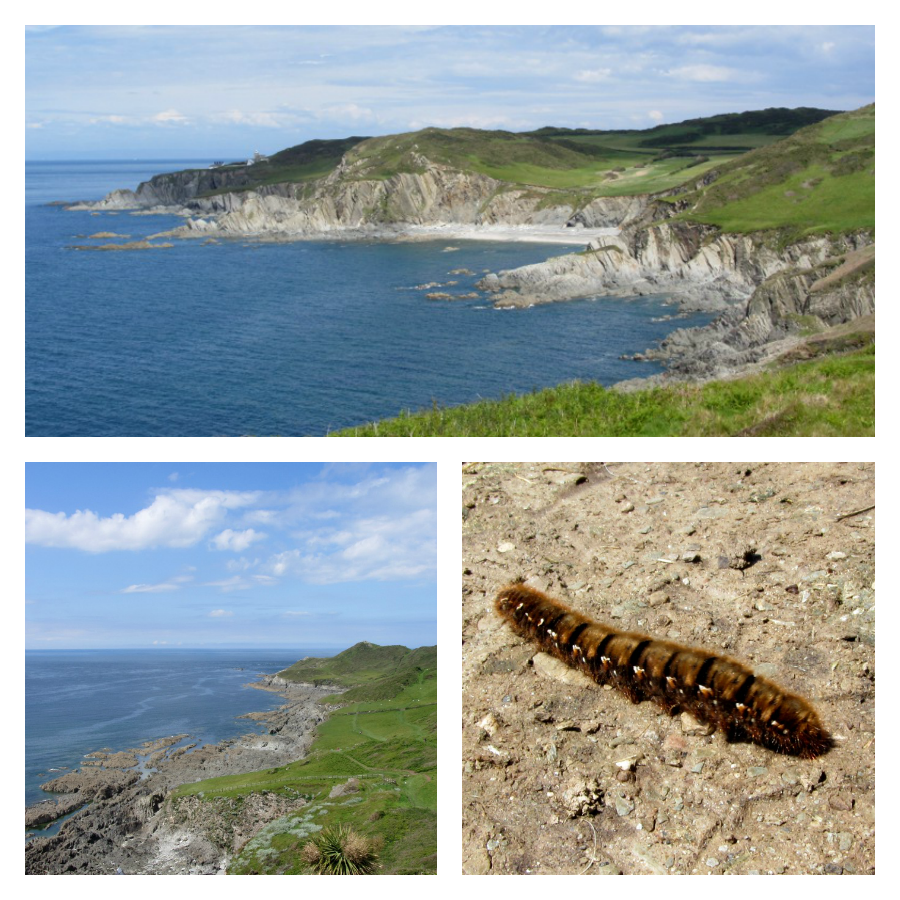 Coast path Mortehoe