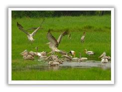 Bellanwila–Attidiya Bird Sanctuary