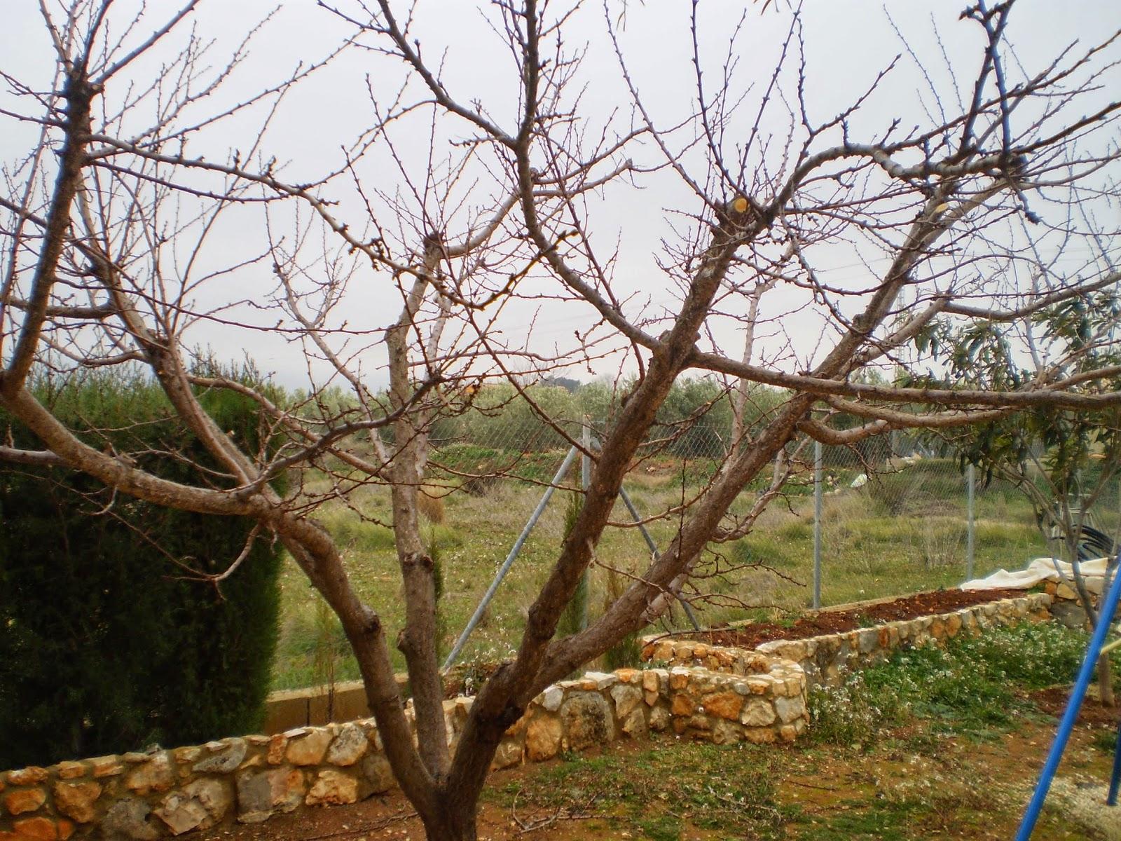 Cultivar el huerto casero el invierno en el huerto casero for Preparar el huerto en invierno