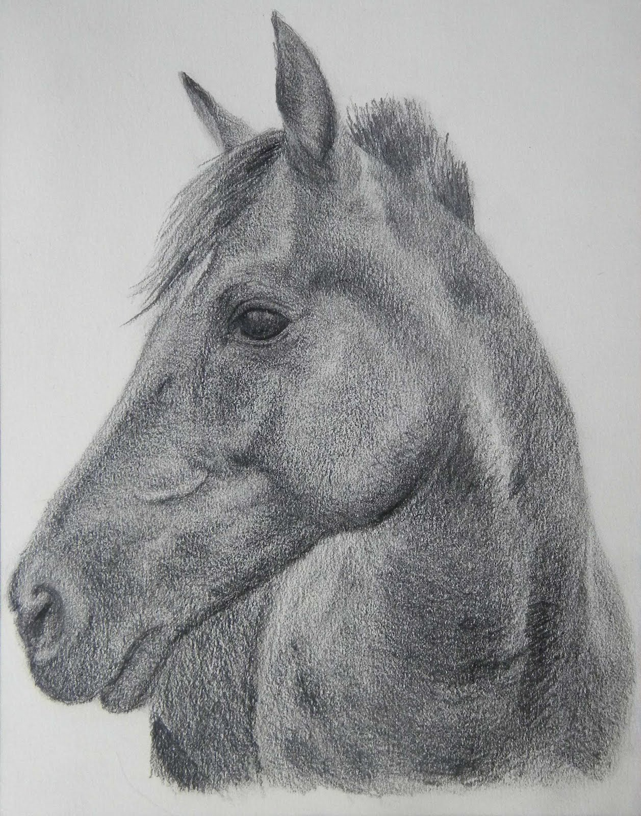 Black horse head drawing - photo#5