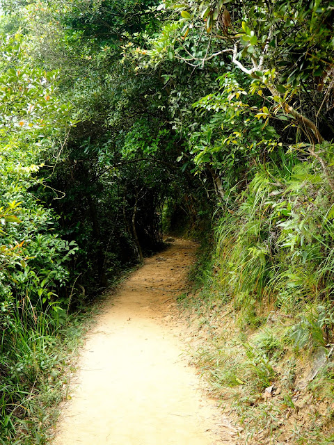 Forest path lined with trees on Dragon's Back trail, Hong Kong island