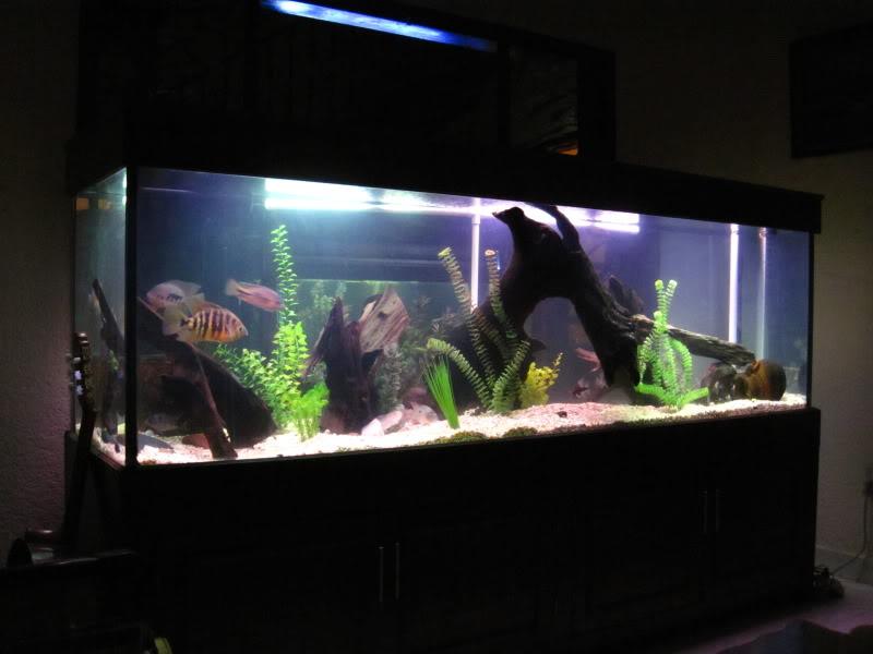 acuario virtual la gu a b sica de los c clidos
