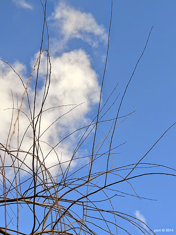 spirited by espionage gallery - blue sky branches