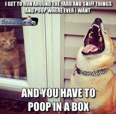 funny dogs pets humor