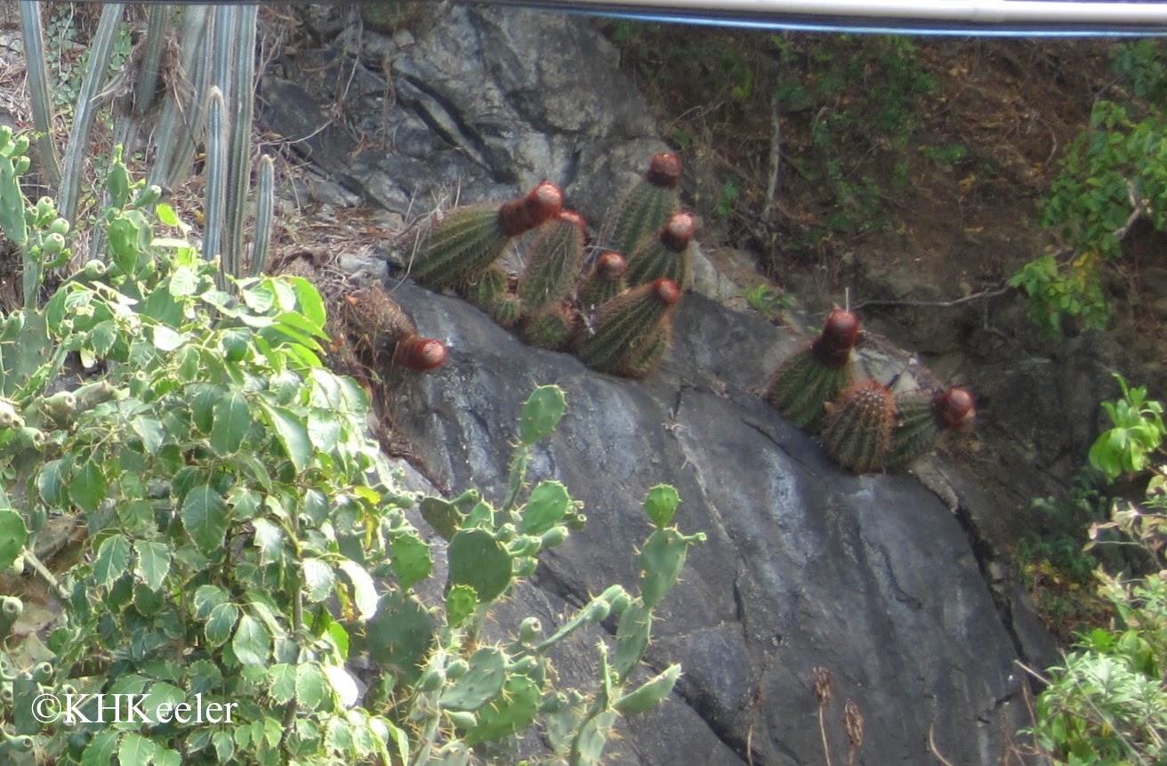 Cacti on a ledge