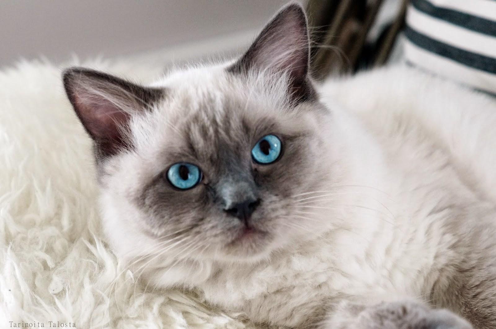 """""""INTERIOR CAT"""""""