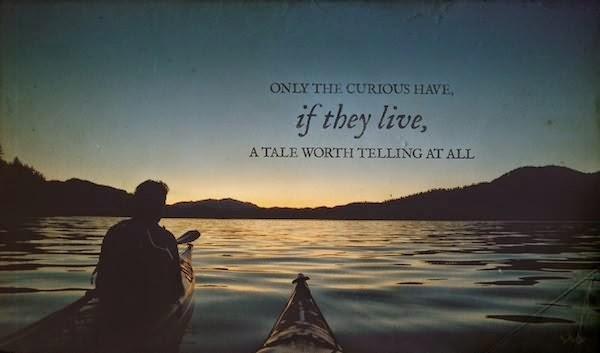 Curiosity Quotes 81 | Image Quotes