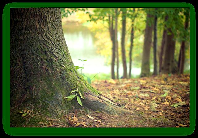 en contacto con el bosque