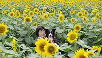 http://border-polly.blogspot.jp/2013/07/blog-post_22.html