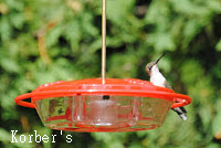 hummingbird perched on feeder