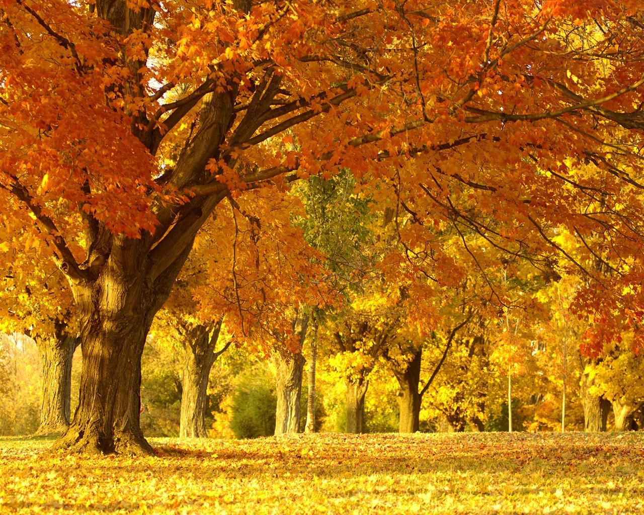 Paisaje otoño invierno