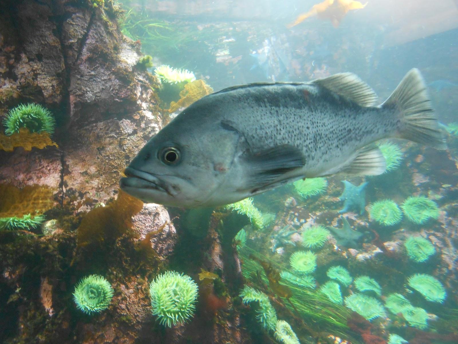 Amazon rainforest fish the image kid for Fish of the amazon