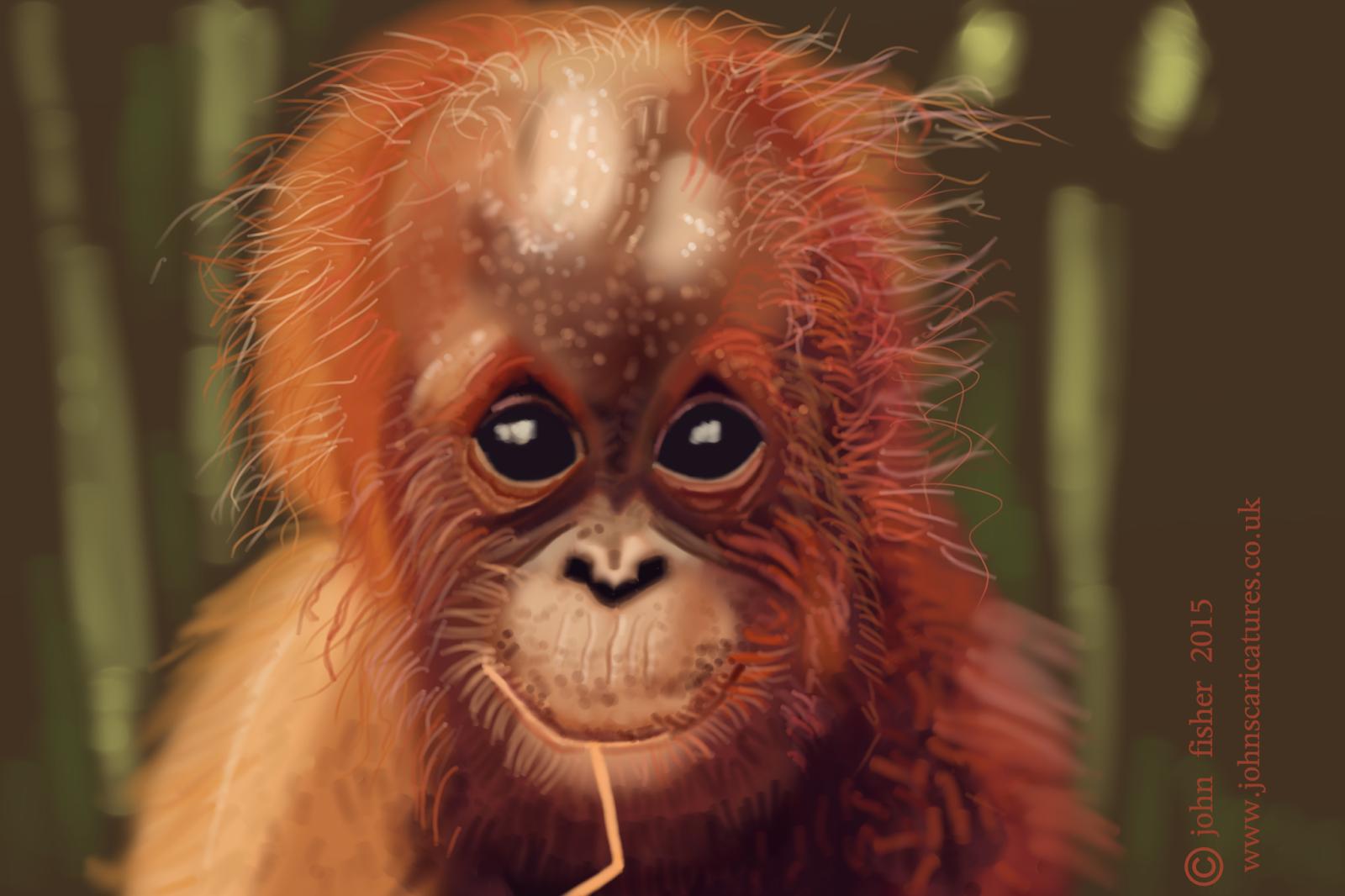 Bevorzugt AMBre: Bébé Orang-outan SD17
