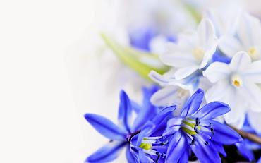 #3 Great Flowers HD Wallpapers