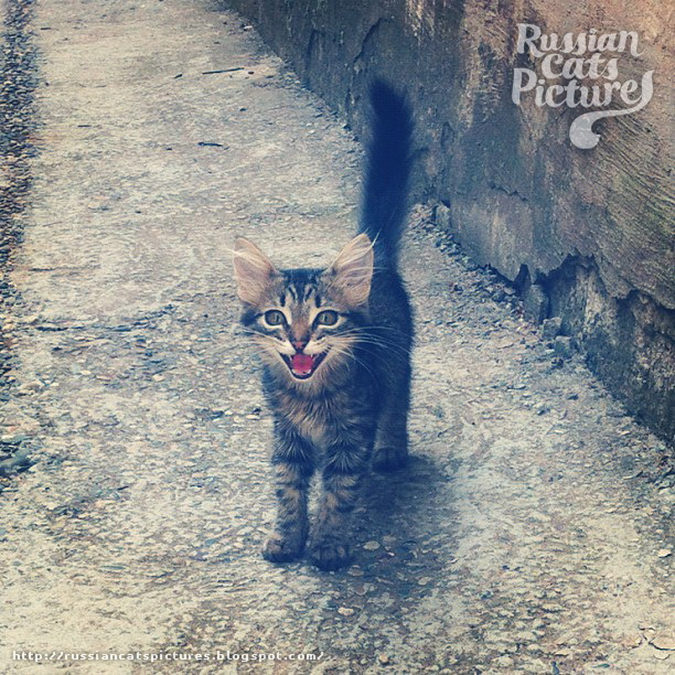 Happy Instacats Cat 03