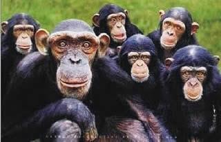 macacos e angrenses esperando...