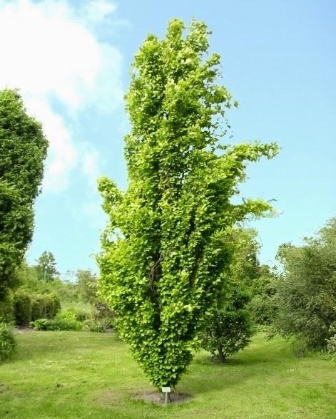 Jardin alsace vignoble for Arbre de jardin pour ombre