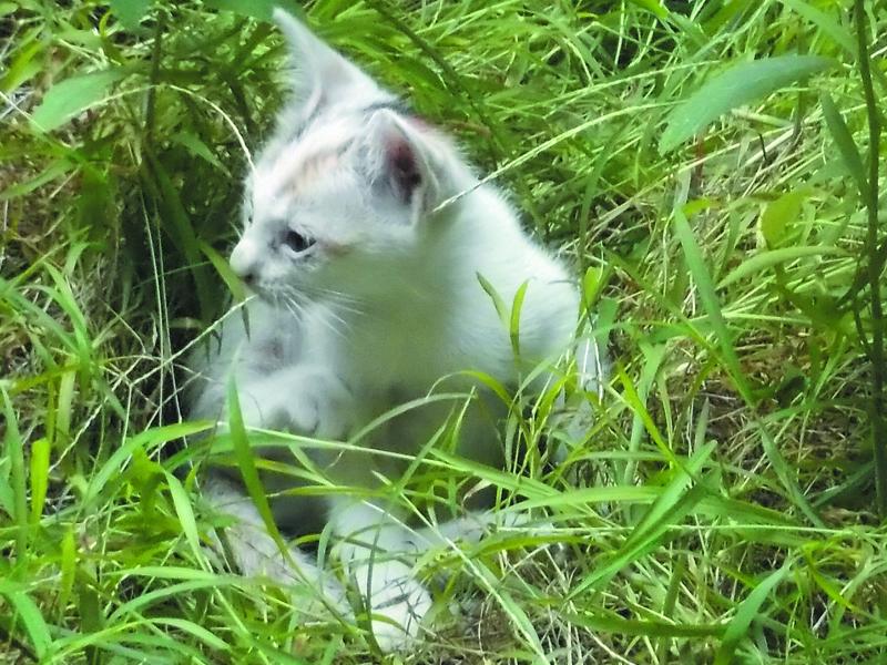Gambar Kucing Dari Samping godean.web.id