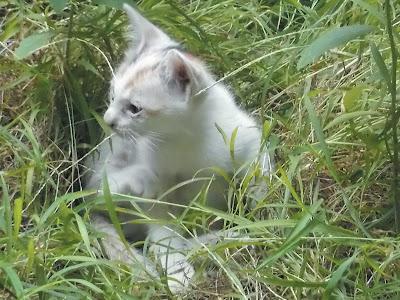 cara menemukan kucing yang kabur dari rumah