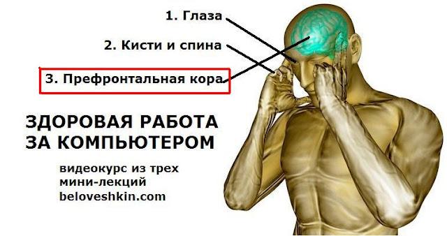 Нейробиология продуктивности: префронтальная кора.