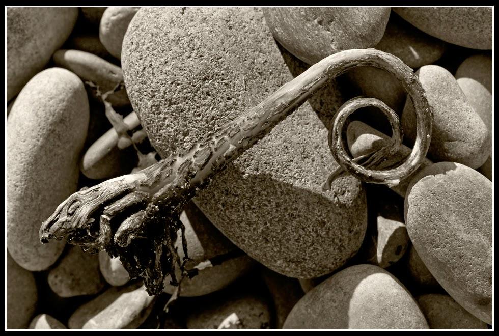 Nova Scotia; Hirtle's Beach; Rocks; Seaweed