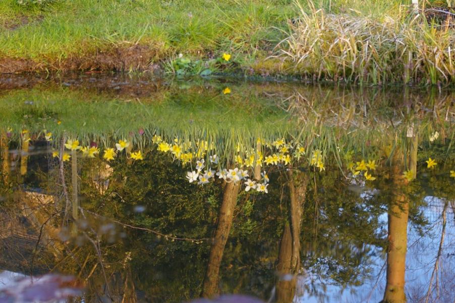 John Grimshaws Garden Diary: Around the world in 4901 images