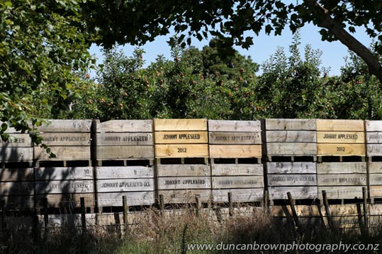 Apple bins in Karamu Rd, Hastings photograph