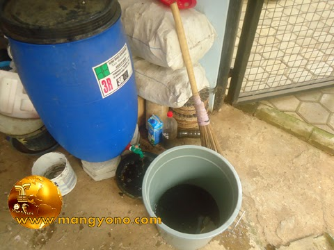 FOTO : Mengeluarkan pupuk organik cair dari dalam tong pembuatan pupuk organik.