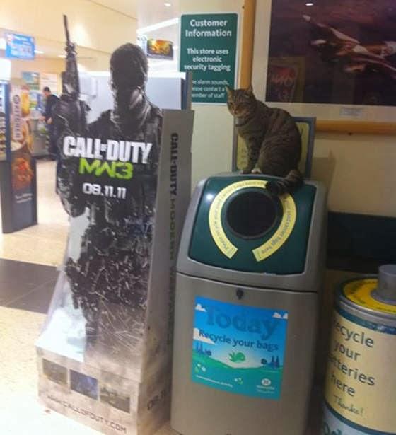 Brutus si Kucing Supermarket di atas recycle bin favoritnya