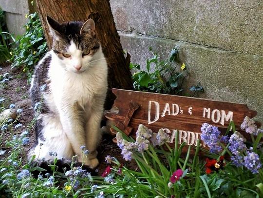 Cat from Deurne, Belgium