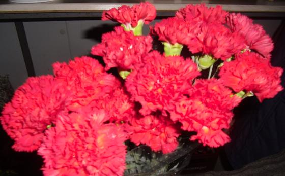 Horticultura y cultivos ornamentales caracter sticas que for Plantas ornamentales clavel