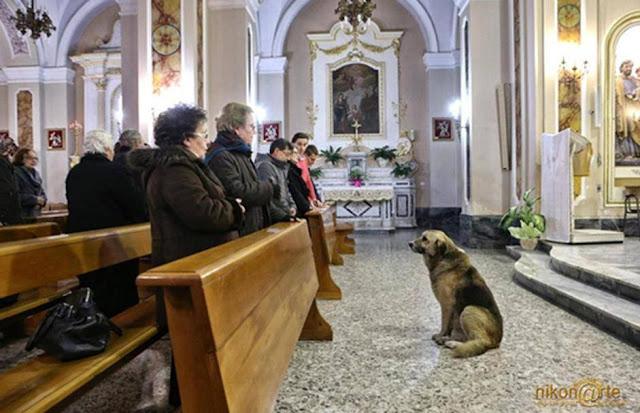 El perro que espera a su dueña muerta dentro de la iglesia