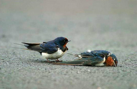 how to tell if a bird is injured