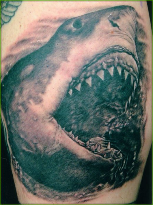 shark tattoo designs. shark tattoo designs. a shark
