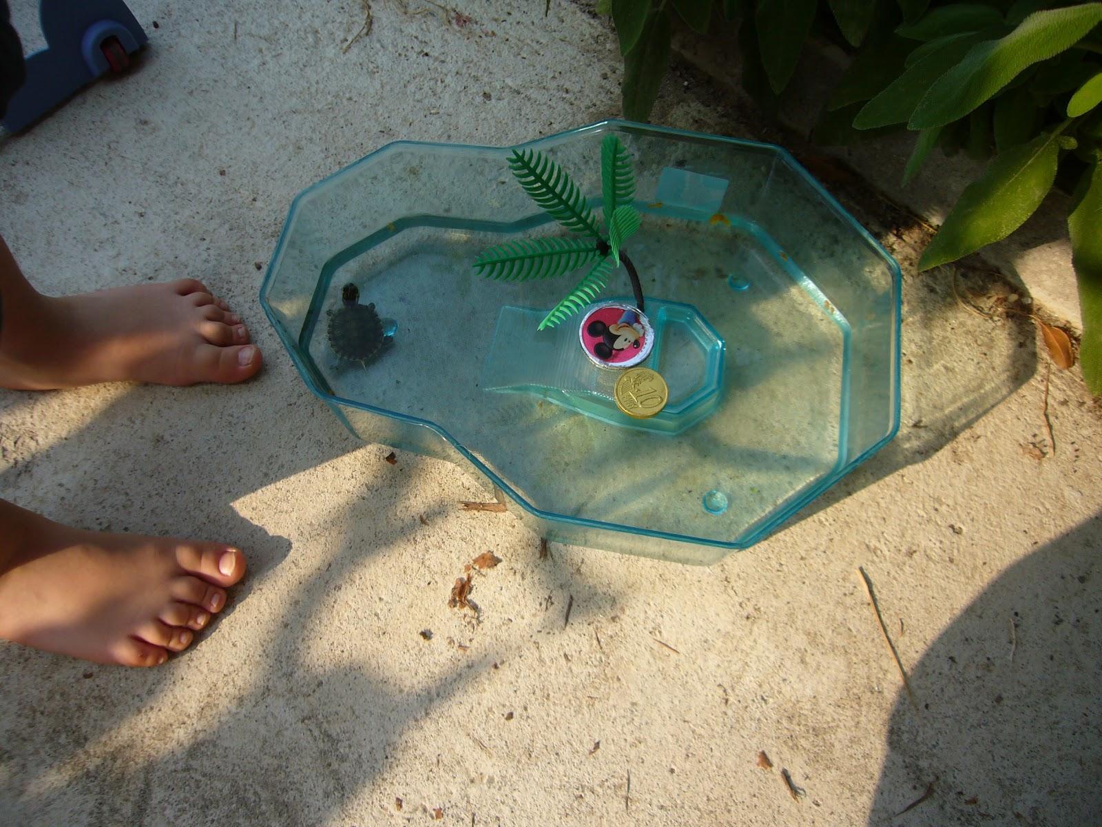 Salviamo suzy tartarughine d 39 acqua for Vaschetta tartarughe prezzo