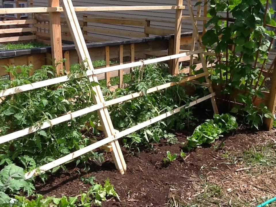 Suburban Backyard Farm July 2013