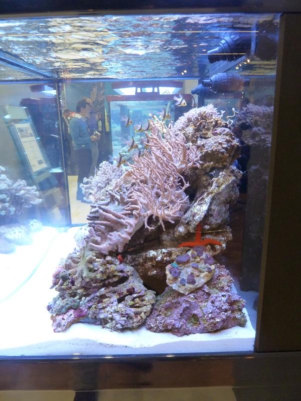 Seahorse aquariums an evening with seahorse aquariums for Seahorse fish tank