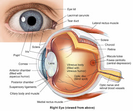 Terapi Mata Secara Alami