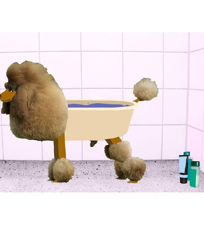 tosset print af en puddlehund