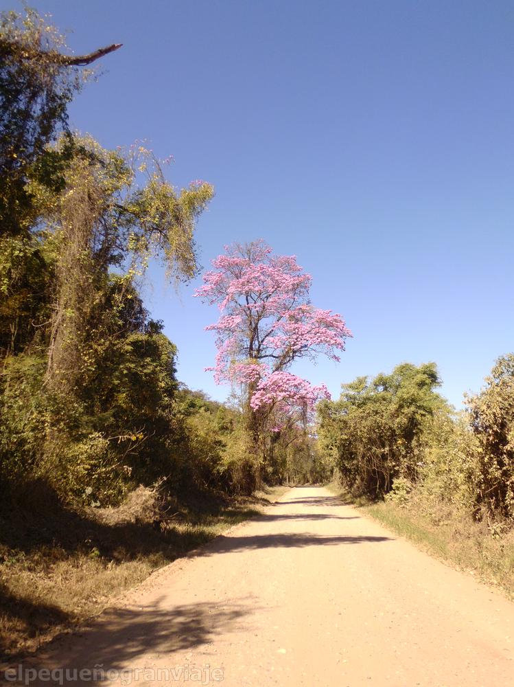 Jujuy, yungas, calilegua, parque nacional