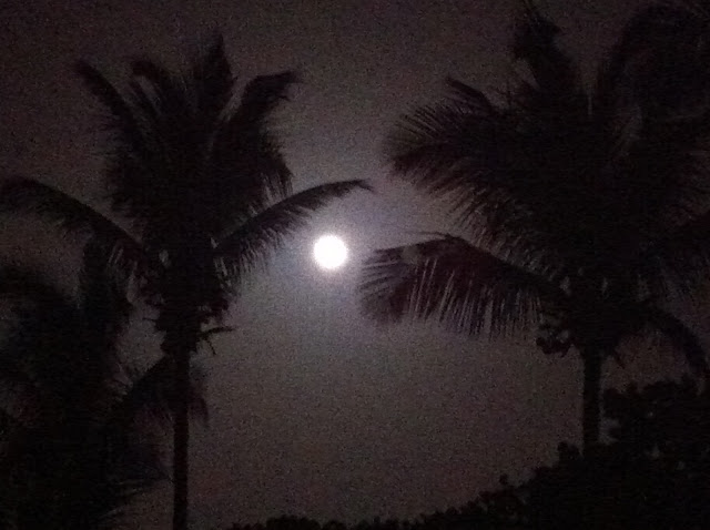 Full Moon Through the Palm Trees at Cinnamon Bay US Virgin Islands