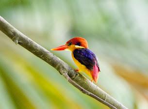 TRK for birding
