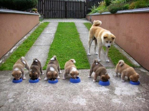 Cute-puppies-5