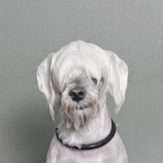 Sophie Gamand fotografia cachorros molhados