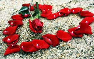 petalos de rosa que forman corazón
