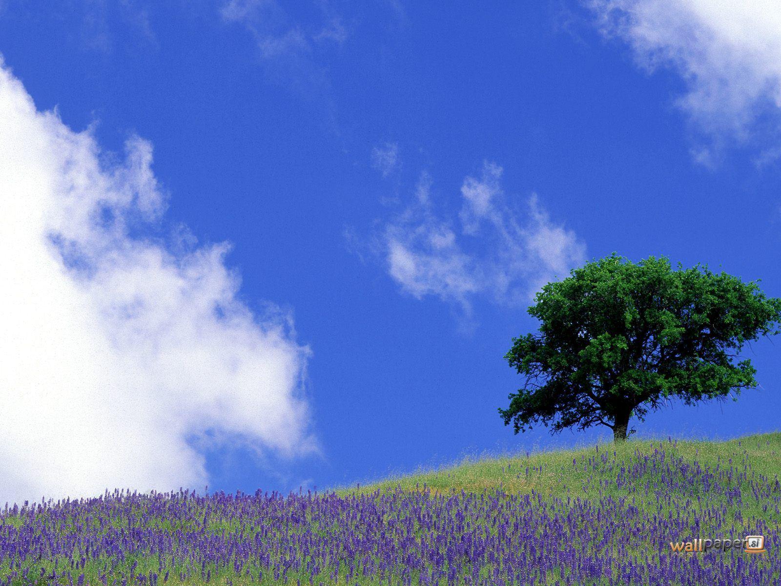 http://4.bp.blogspot.com/-bcftk2pdTGU/TsNJnkkMSXI/AAAAAAAAAhs/716HszwyLKE/s1600/Tranquil-Field-Sierra-Nevada-Foothills-California-Wallpaper.jpg