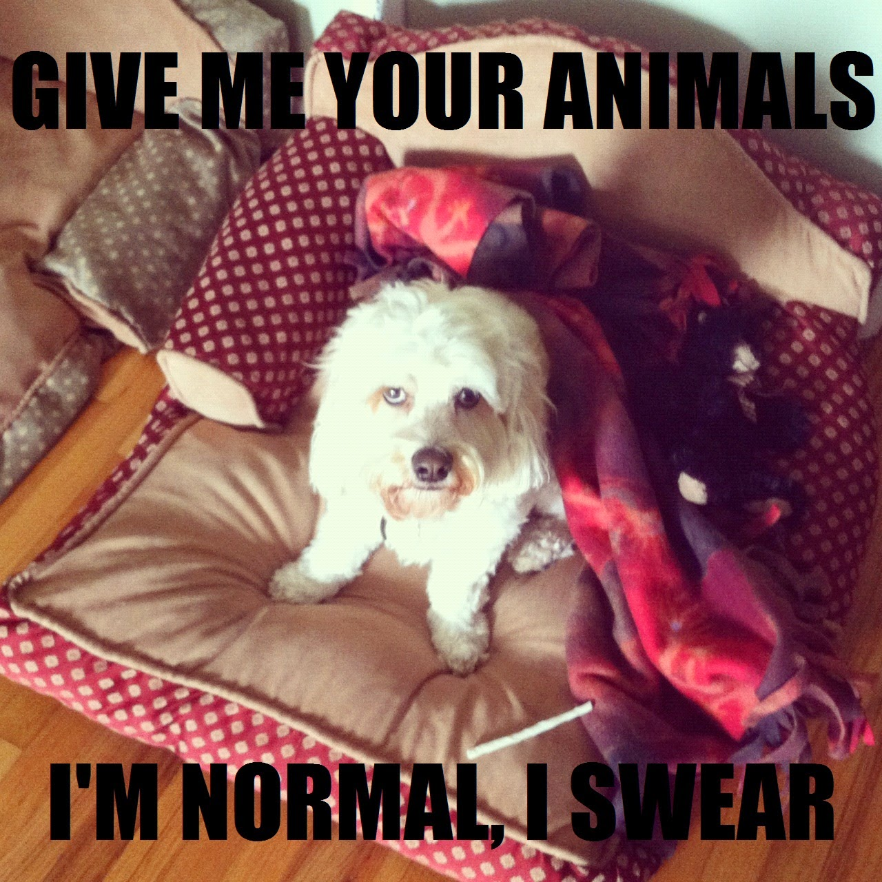 i'm normal i swear