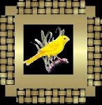 Meu passarinho