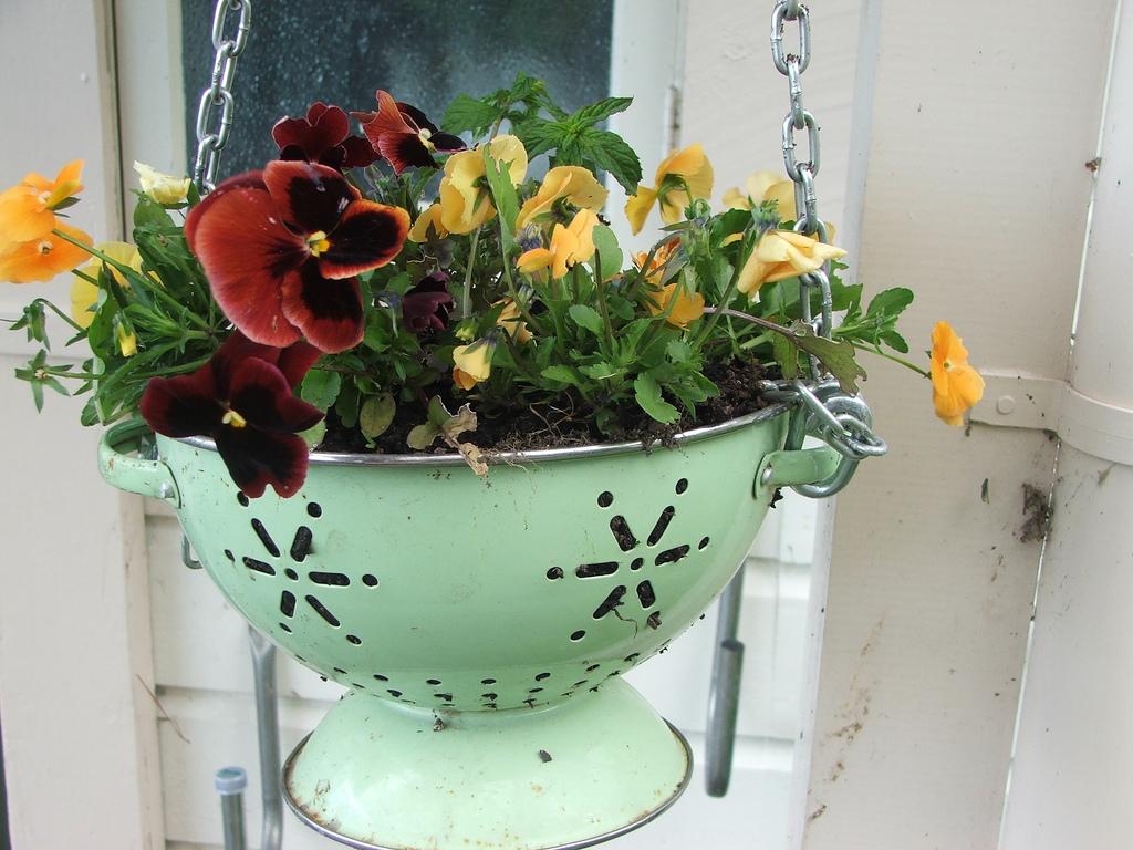 Alba hogar plantas para colgar for Ideas para colgar plantas