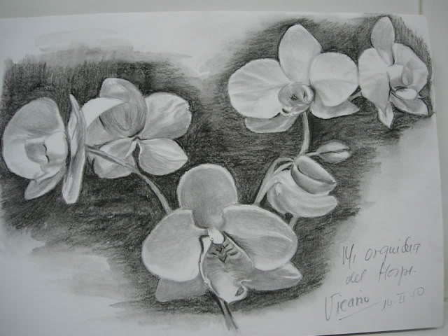 Dibujos de la orquidea para colorear - Imagui